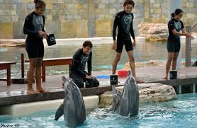 Smart dolphins training earthling humans