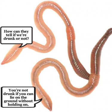 Scientists create worms that can't get drunk