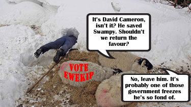 David Cameron rescues sheep